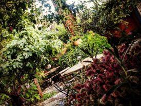 mexico-3-jardin-con-barbacoa-para-fiestas